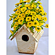 Sunrise Bird House at Kapruka Online